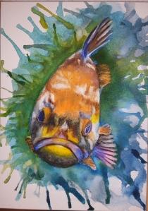 Grumpy copper rockfish