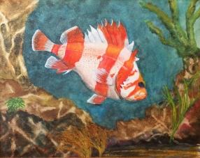 flag rockfish 2015-11-17 16.15.29
