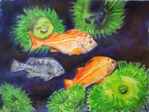 Three rockfish and anemones